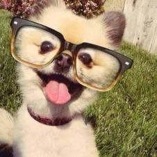 goofy dog