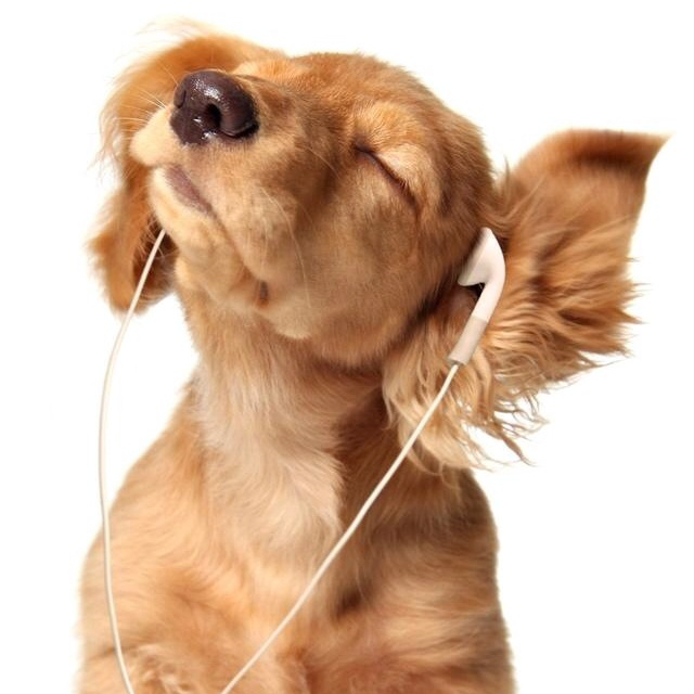 Songs To Put A Dog Video To
