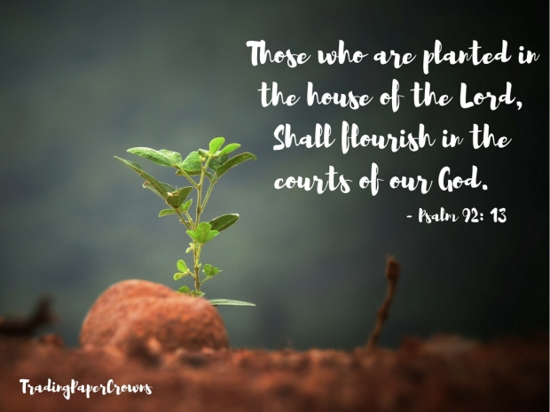 Those who are planted in the house of the Lord, Shall flourish in the courts of our God. - Psalm 92_ 13